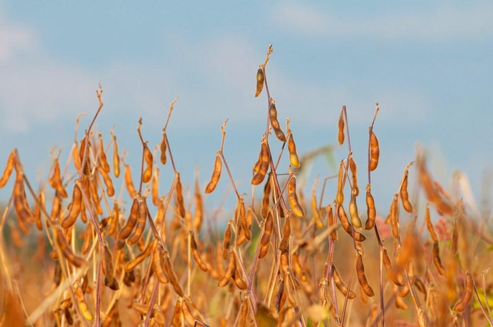 propriedades da soja