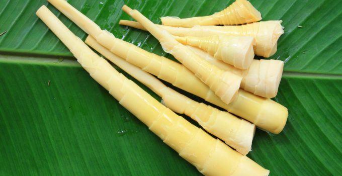 propriedades do broto de bambu